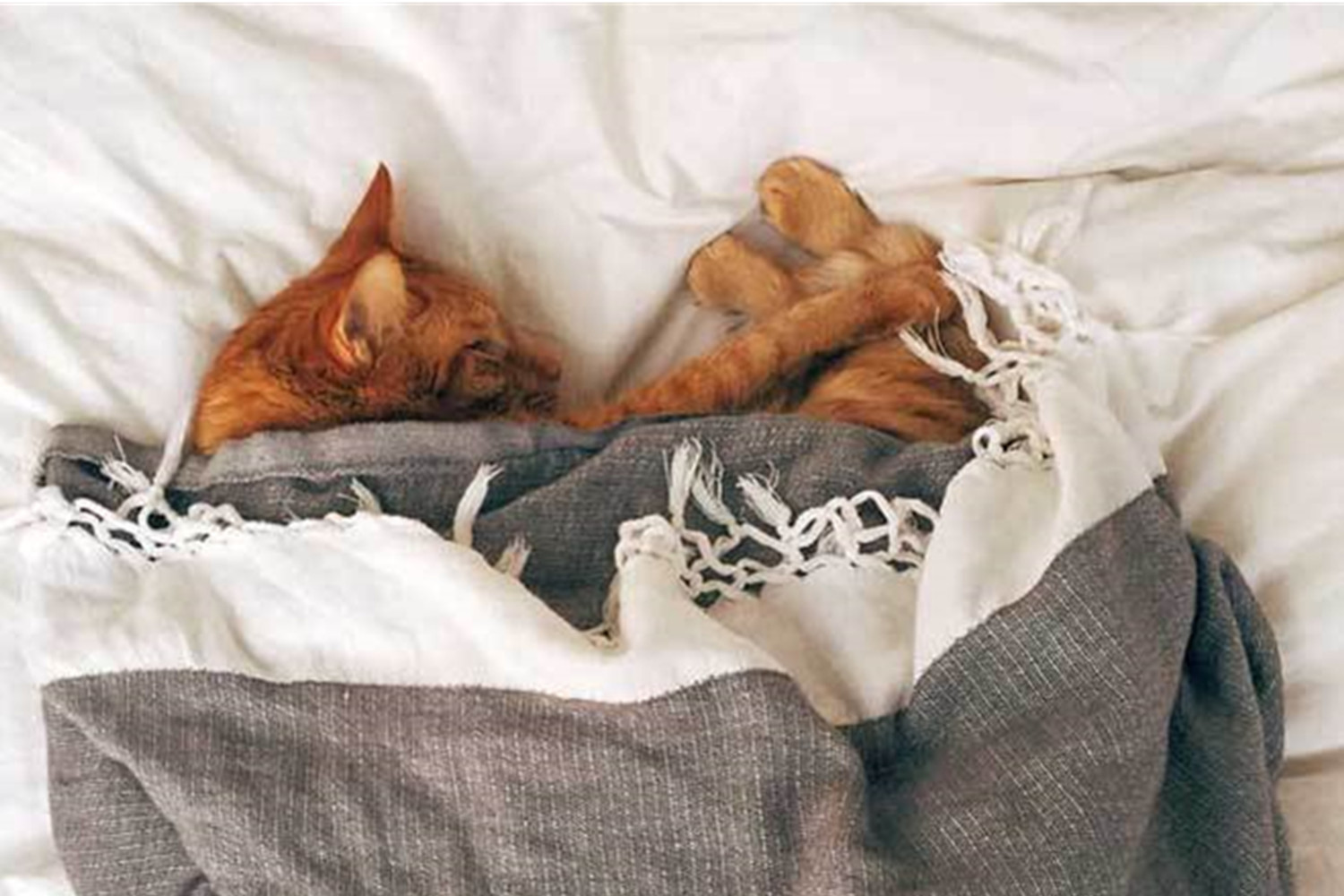 Why Do Cat's Sleep So Much- Important Reasons.
