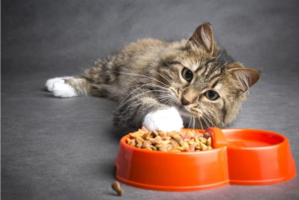Guide To Cat Diet- Select The Best Cats Food For Your Pet1