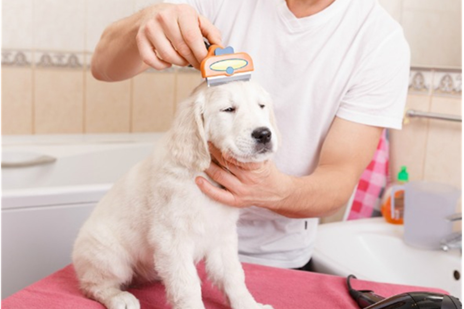 How To Do Pet Hair Removal- Important Pet Grooming Tips To Follow.