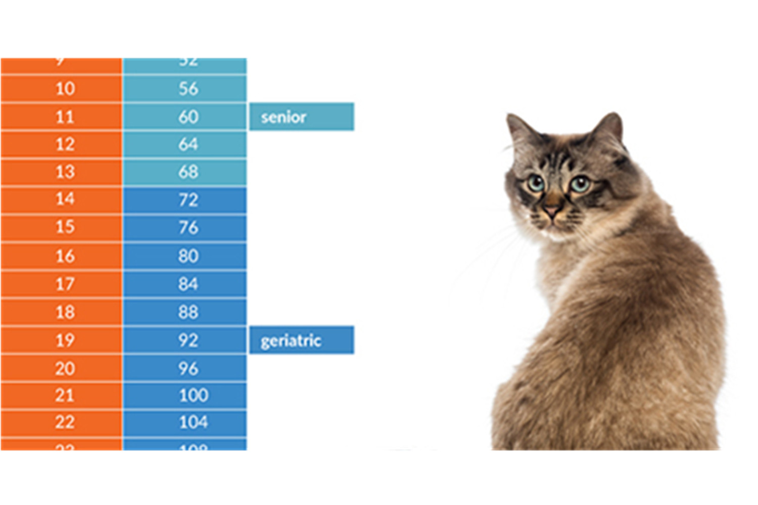 How To Tell A Cat's Age