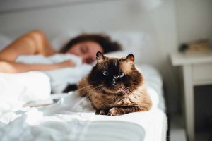 Let The Cat Sleep In The Bed: Creating A Strong Bond