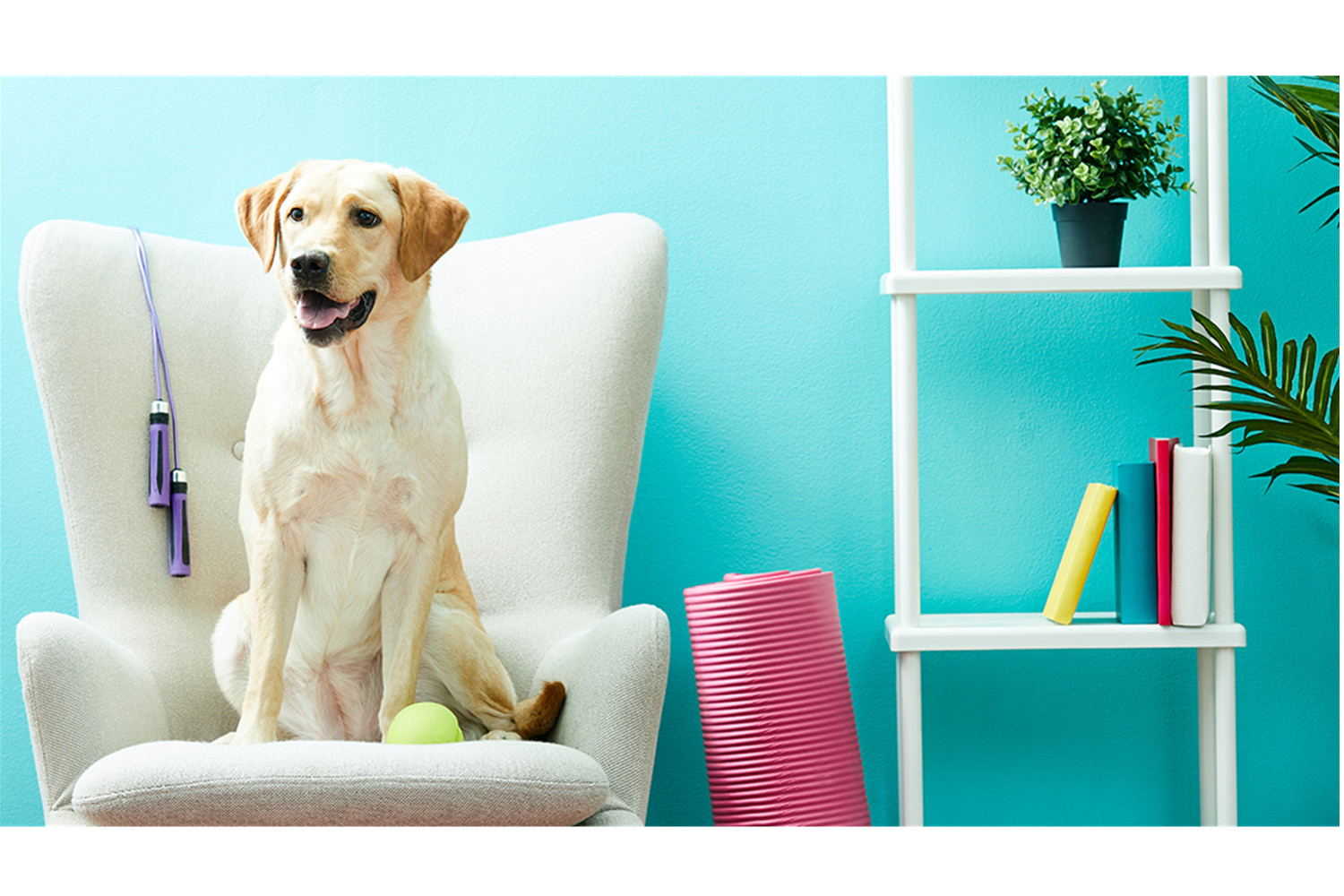 Apartment Living: Pets Fit Everything