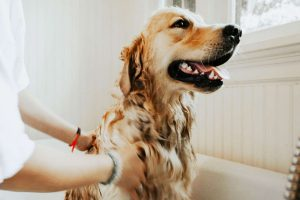 Why You Should Bathe Your Dog?