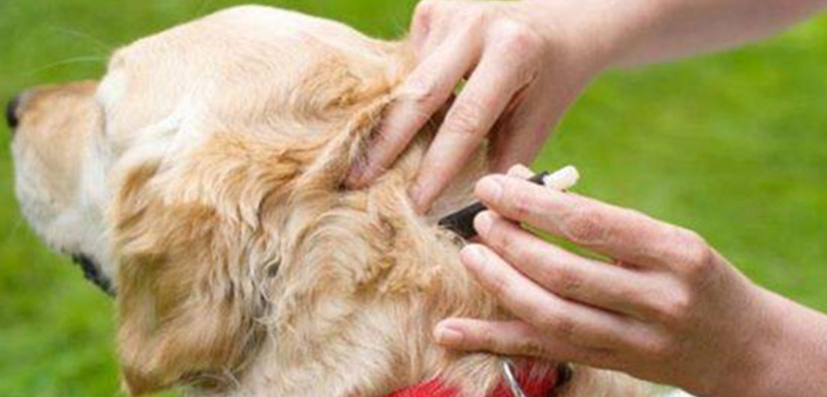 An expert is inevitable for your dog's problem