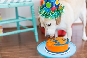 Tips For A Pet Birthday Party