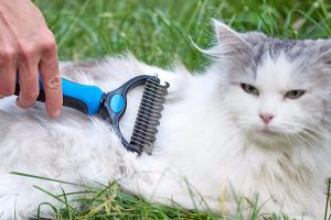 Cat Grooming Tool That You Should Have