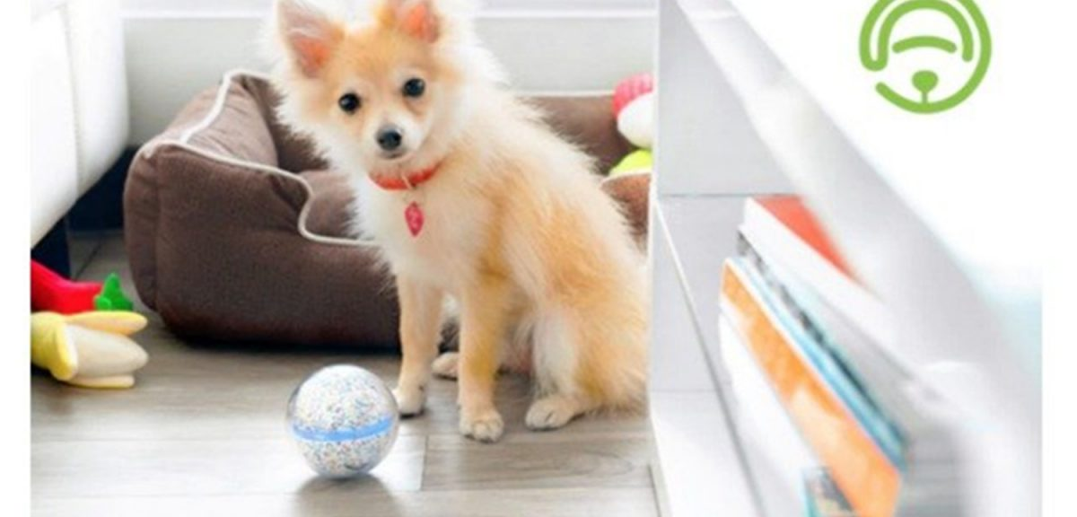 Dog Toy: This Is How A Ball Is Good For Your Pet's Development