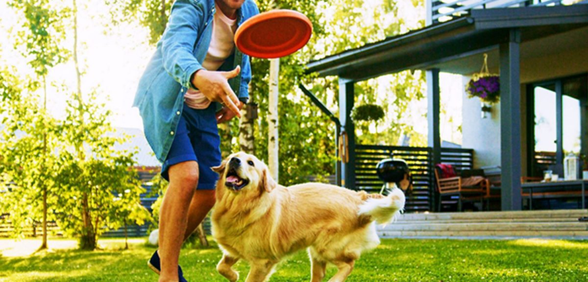 Dog Training Tips For Frisbee Fun And Activities